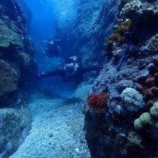 海灣體驗潛水行